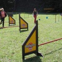 1. Hundeolympiade in St. Ingbert