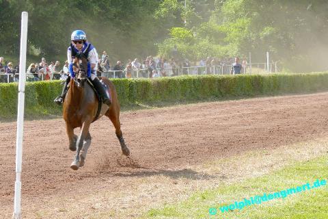 Pferderennen Güdingen