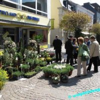 Sankt Ingberter Frühling 2010