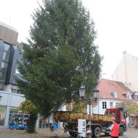 Tannenbaum in der Fußgängerzone